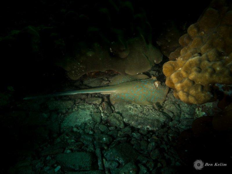 underwater -0684.jpg